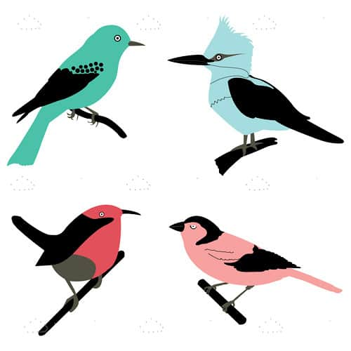 Different birds